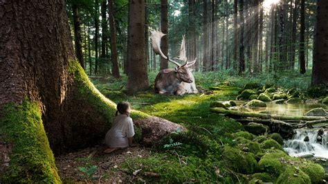 fairytale forest wallpapers hd wallpapers id