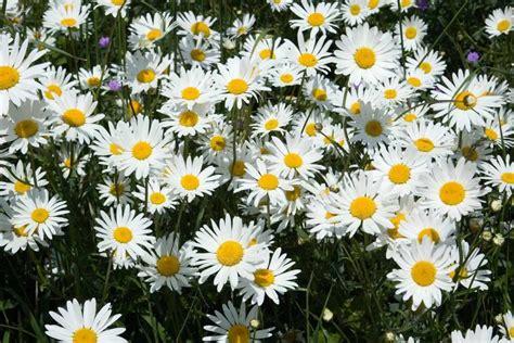 Daudzgadīgās puķes- izlase krāšņai dobei - Tava Klade
