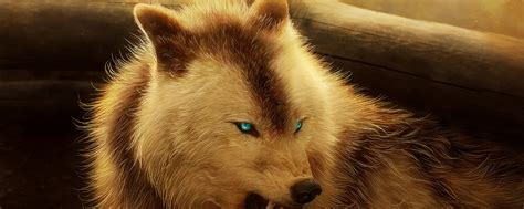 Angry Wolf Wallpaper 4k by Angry Wolf Hd 4k Wallpaper