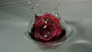 Water Splashing Rose - Wallpaper #37029