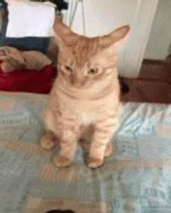 Funny cats - part 109 (40 pics + 10 gifs) | Amazing Creatures