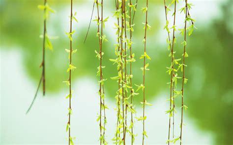 春天的绿色唯美壁纸,高清图片,电脑桌面-壁纸族