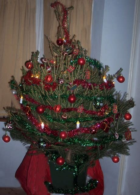 decorated christmas tree e2bn gallery