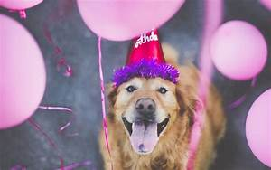 Dog Happy Birthday - Wallpaper, High Definition, High ...