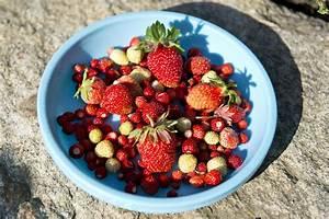 Wann Ist Knoblauch Reif : rot wei roter erdbeer mix petzis garten und k che ~ Lizthompson.info Haus und Dekorationen