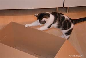 Mit Katze Umziehen : umzug mit katzen umzug mit katzen tipps f r das umziehen ~ Michelbontemps.com Haus und Dekorationen