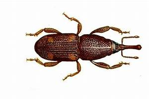 Pestweb Insect Identification Key