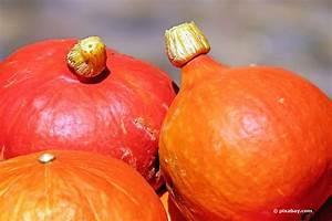 Hokkaido Kürbis Ernten : hokkaido k rbis ernten wann ist die beste erntezeit f r k rbisse ~ Orissabook.com Haus und Dekorationen