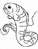 Eel Coloring Wolf Electric Mudkip Pages Getcolorings Printable sketch template