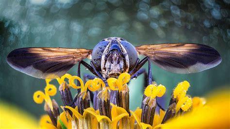 Flower Fly Bing Wallpaper Download