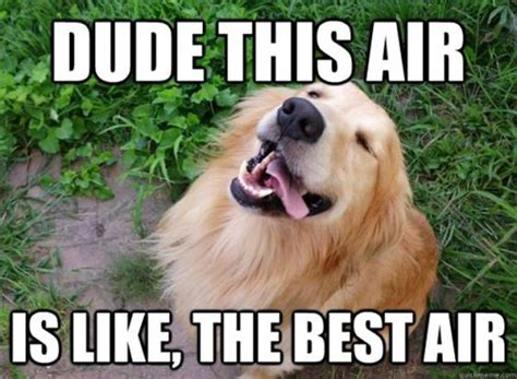 Stoner Dog Meme - memes the o jays and pets on pinterest