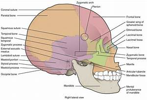 Skull Anatomy Diagram