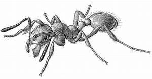 Lab 7 Assignment  Soil Arthropods  U2013 Entomology 311 Lab Manual