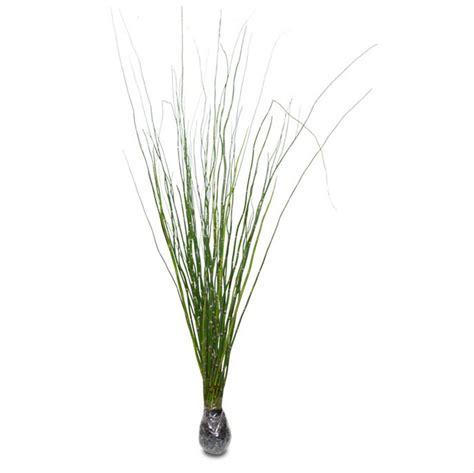 jual tanaman hias bambu air batang unik hias