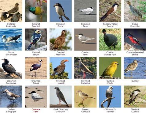 Keep reading and find out just how fascinating africa's wildlife. South African Bird Species in 2021 | South african birds, Bird species, African