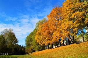 Schöne Herbstbilder Kostenlos : herbstbild farbenspiel n rnberg prinzregentenufer foto ~ A.2002-acura-tl-radio.info Haus und Dekorationen