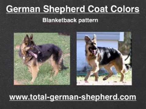german shepherd coat colors gsd coat colors  patterns youtube