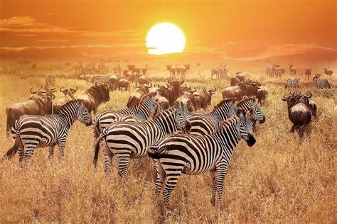 Kenya Wildlife Safari Packages - smarTours