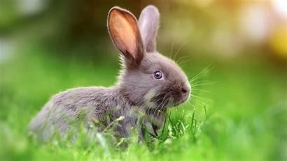 Rabbit 4k Bunny Animals Bunnies Wallpapers Names