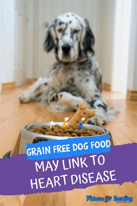 grain  dog foods  link  heart disease fidose