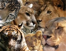 the big cat xmxrbigcats
