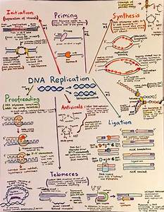 28 Best Images About Science Mind Maps On Pinterest