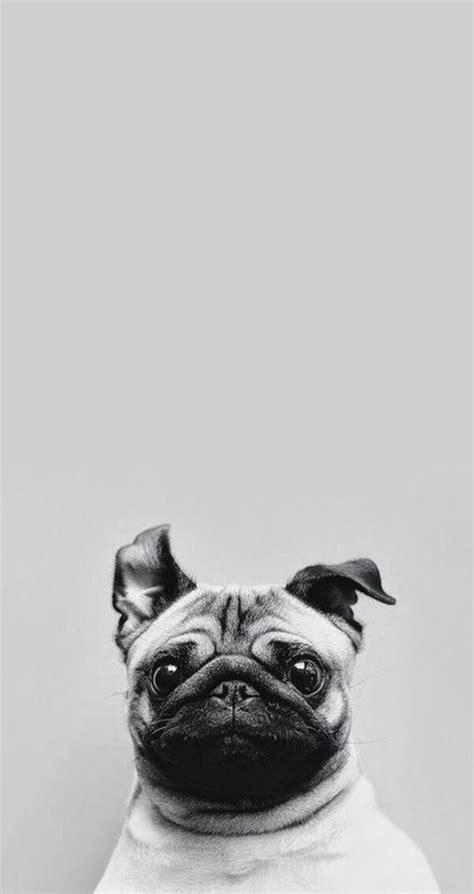 amazing animal iphone wallpaper