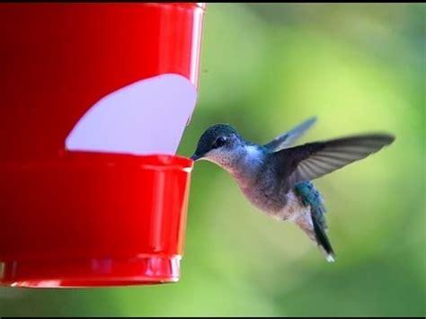 cheap hummingbird feeder youtube