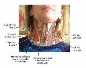 Spine Diagram Neck