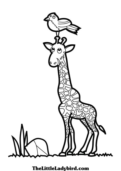 birds and giraffes coloring pages giraffe coloring pages clipart panda free clipart 5947