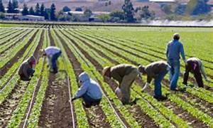 Implications of immigration policies for U.S. farm sector ...