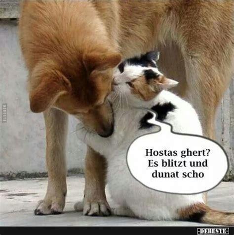 lustige bilder von hunde katzen   lustig neue