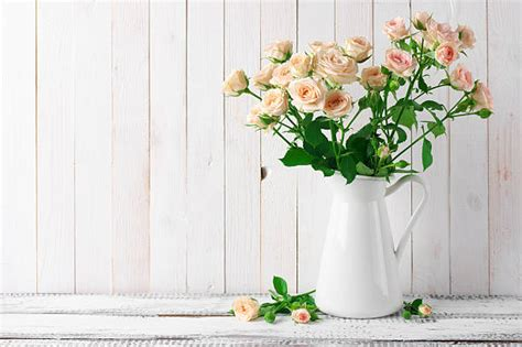 roses  vase stock  pictures royalty  images