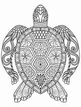 Coloring Adults Adult Printable Pages Books Zentangle sketch template