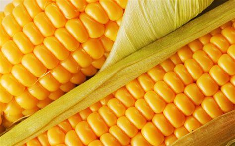 mais cuisine fresh corn desktop wallpaper