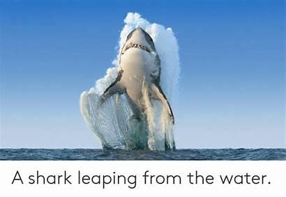 Shark Jumping Water Leaping Shutterstock Vectors