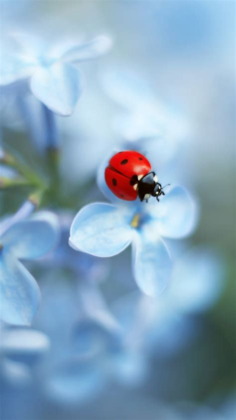 wallpaper ladybug flower  animals