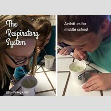 Stem Club The Respiratory System  Respiratory System, Activities And Middle School