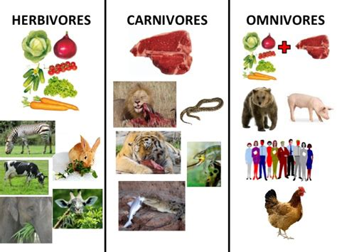 carnivores herbivores omnivores animals eat