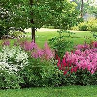 shade perennials zone 7 18 best Perennials- Full Sun-Zone 7 images on Pinterest ...