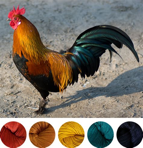 installing moen kitchen rooster colors 28 images how to draw a colorful bird