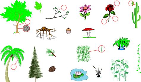 plants english vocabulary english vocabulary vocabulary