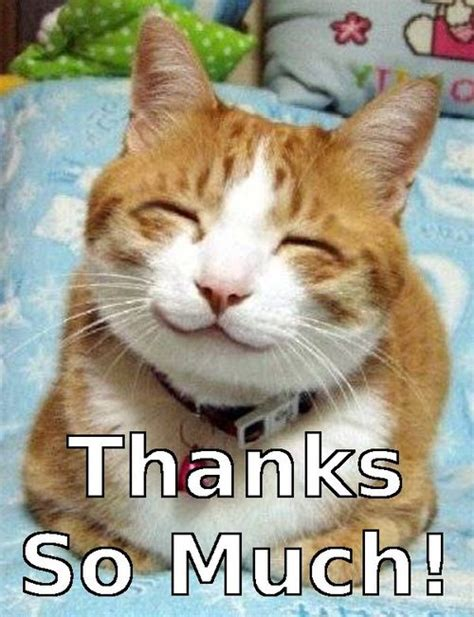Happy Kitten Meme - happy excited kitten gallery