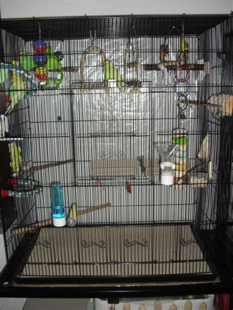 riproduzione cocorite in gabbia nuova gabbia cocorite e pappagallini ondulati