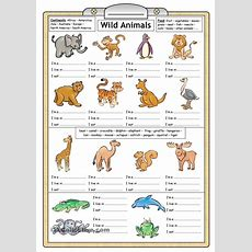 Wild Animals  Reading & Writing Worksheet  English Grammar  Pinterest  For Kids, Search And