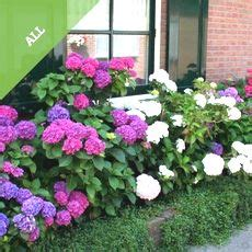 Buy Hedges Affordable Gardens4youie