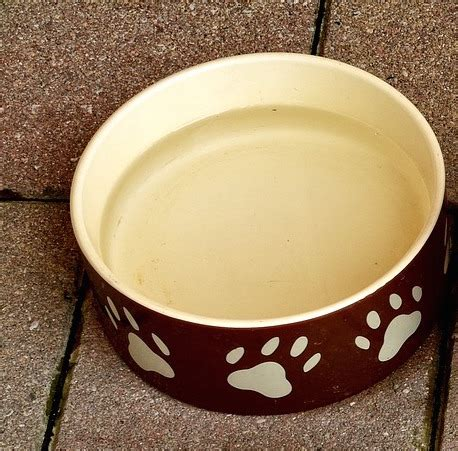 bowls dog ceramic bowl stoneware options