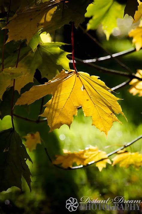 Autumn leaf | Autumn leaves, Plant leaves, Leaves