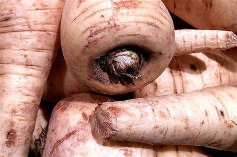 Kann Zucchini Roh Essen by Kann Zucchini Roh Essen Zucchini Was Kann Mit