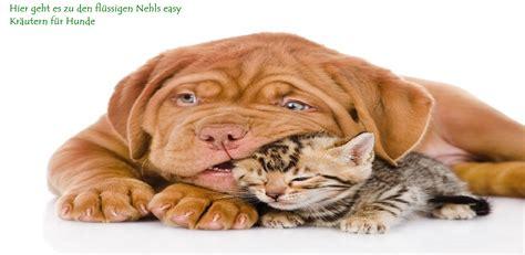 magenkrankheiten bei hunden